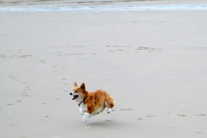 Manz Mar 14 Cleo in flight