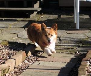 Cleo running Jan 2014