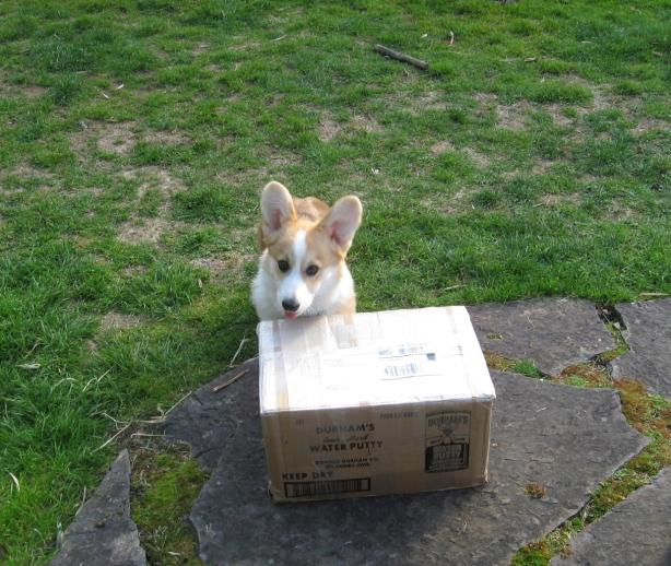 box 3b