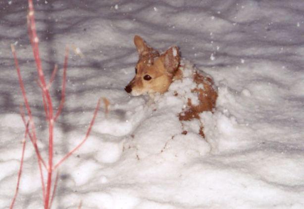 emma blizzard 04